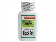 Черна кралска мравка
